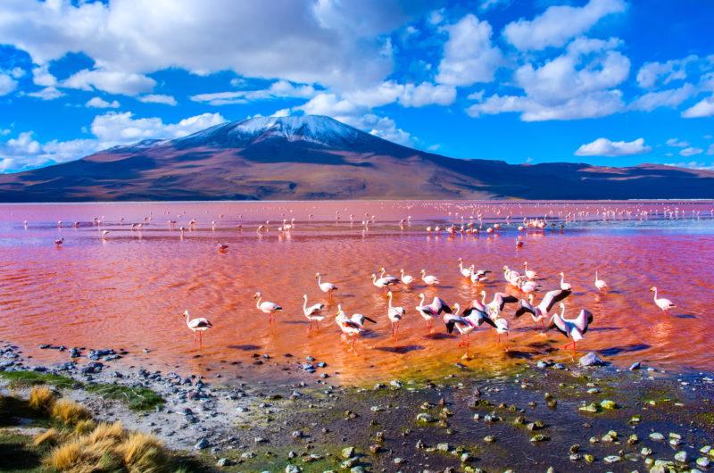 Gruppenreise zur Laguna Colorada Uyuni Bolivien