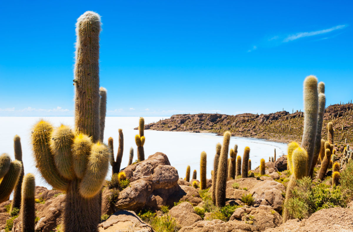 Großer Kaktus auf der Insel Incahuasi, Salar de Uyuni-Flachsalz, Altiplano, Bolivien
