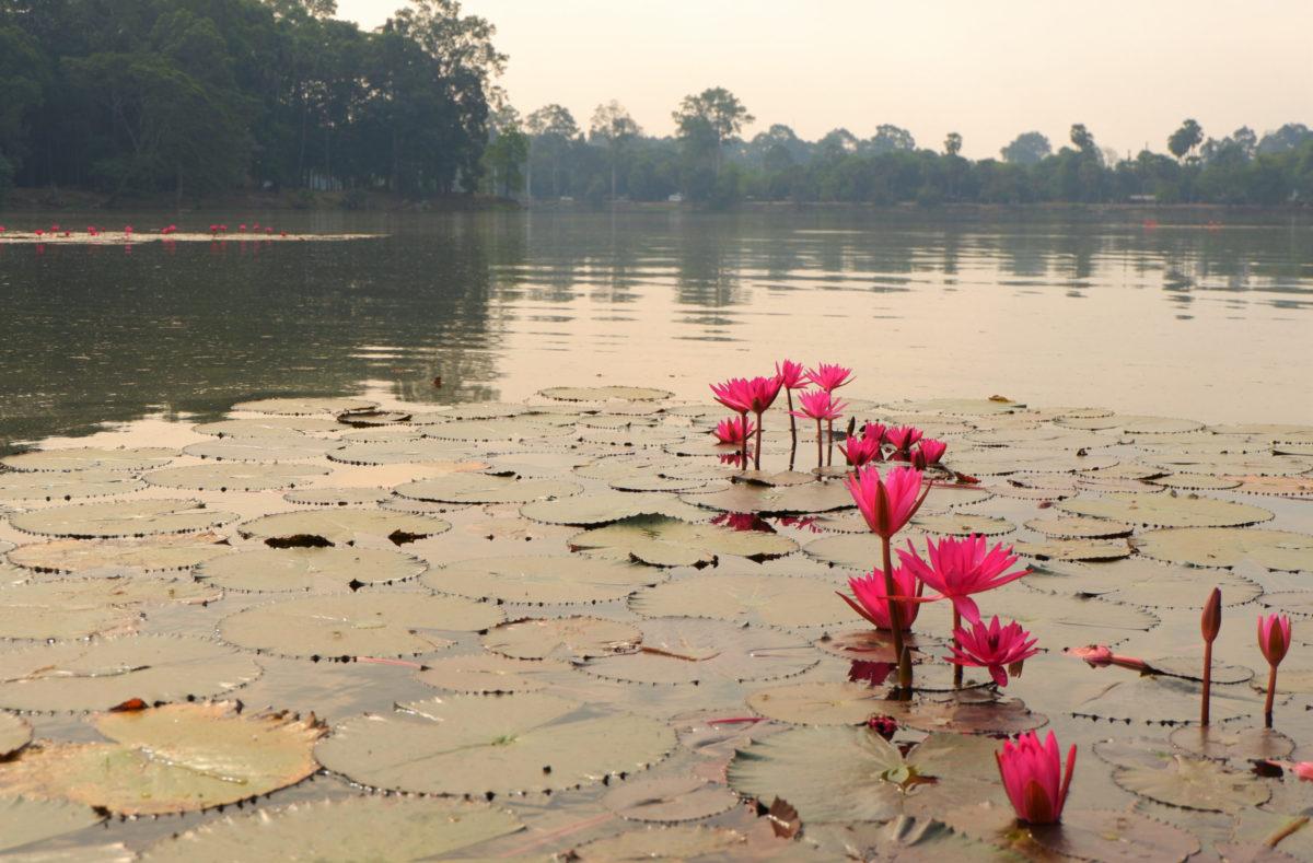 Gruppenbesuch in Kambodscha und Südvietnam