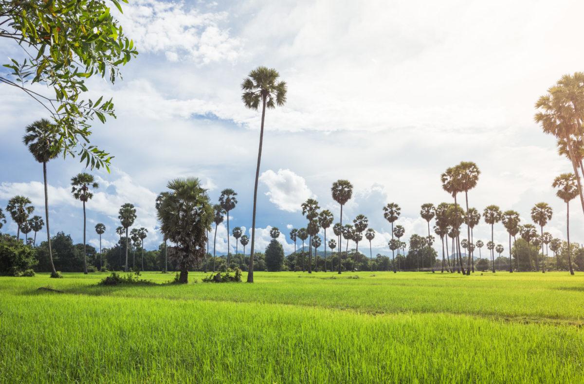Gruppenreise in der Natur von Südvietnam und Kambodscha