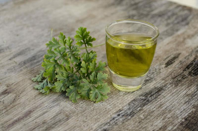 Artemisia absinthium Val de Travers