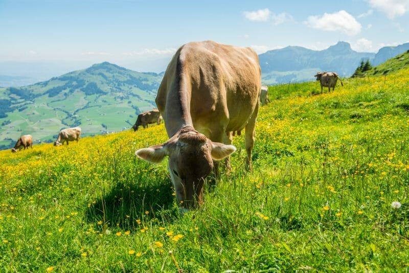 Gruppereise in die Ostschweiz auf dem Land