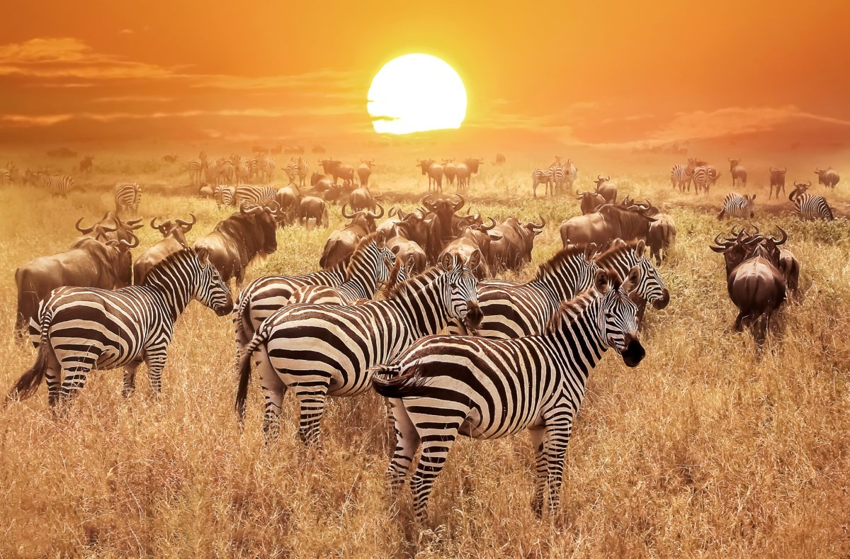 Besuch des Serengeti-Parks bei Sonnenuntergang in Tansania