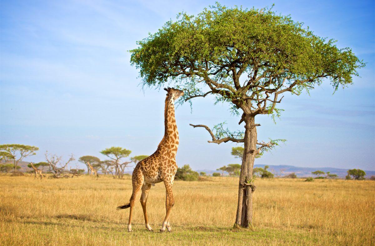 Besuchen Sie das Grumeti-Reservat in Tansania