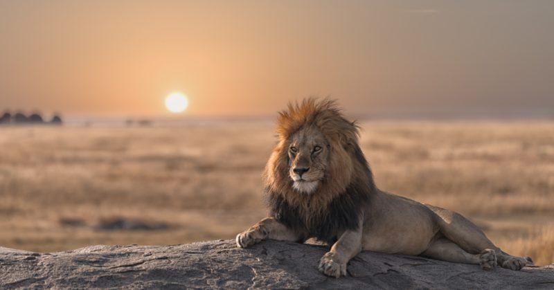 Gruppenreise nach Tansania zur Entdeckung der Tiere